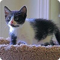 Adopt A Pet :: Sadie - Victor, NY