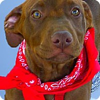 Adopt A Pet :: Ace cutest smartest pup - Sacramento, CA