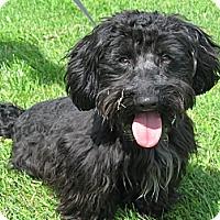 Adopt A Pet :: Albert - Tumwater, WA