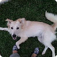Adopt A Pet :: Sadie - Del Rio, TX