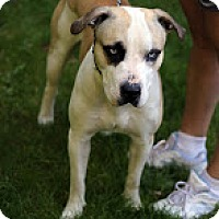 Adopt A Pet :: Jake - Tinton Falls, NJ