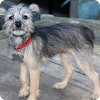 Adopt A Pet :: Mindy - Norwalk, CT