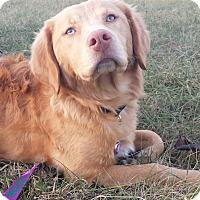 Adopt A Pet :: Daphne - Knoxville, TN