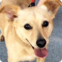Adopt A Pet :: WALDO (video) - Los Angeles, CA