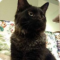 Adopt A Pet :: Big Brother - St. Louis, MO