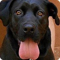 Adopt A Pet :: Rayne - Roswell, GA