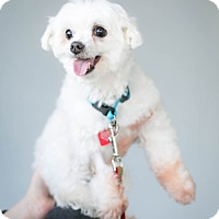 Adopt A Pet :: Felipe will steal your heart - Los Angeles, CA