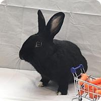 Adopt A Pet :: Jonah - Columbus, OH