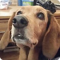 Adopt A Pet :: Gabby - Fort Lauderdale, FL