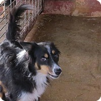 Adopt A Pet :: Chase - Portland, IN