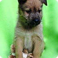 Adopt A Pet :: Roo - Irvine, CA