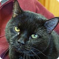 Adopt A Pet :: Oliver - Sprakers, NY