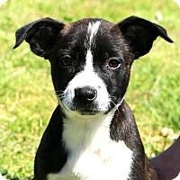 Adopt A Pet :: Bryna - Glastonbury, CT