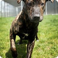 Adopt A Pet :: Albert - Appleton, WI