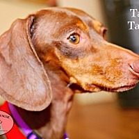 Adopt A Pet :: Tami Taylor - Houston, TX