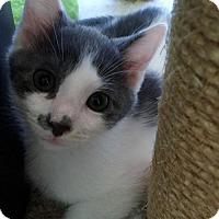 Adopt A Pet :: Jigglypuff - Herndon, VA