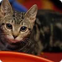 Adopt A Pet :: Eddie - N. Billerica, MA