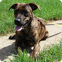 Adopt A Pet :: Tatsy - Angola, IN