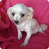 Adopt A Pet :: Kalvin . - Crump, TN