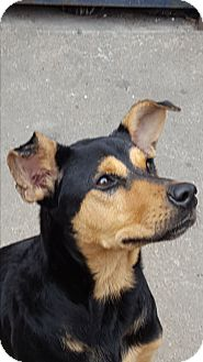 Shepherd (Unknown Type) Mix Dog for adoption in Vancouver, British Columbia - A - PRINCESS