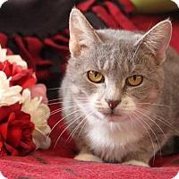 Adopt A Pet :: Momma Anna - Putnam, CT