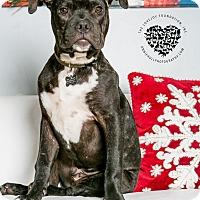 Adopt A Pet :: Flynn - Inglewood, CA