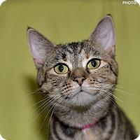 Adopt A Pet :: Michelle - Medina, OH