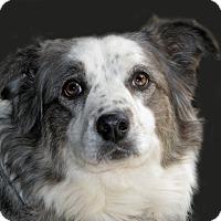 Adopt A Pet :: Sammie - Ruidoso, NM