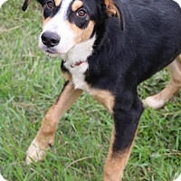 Collie Mix Dog for adoption in Austin, Texas - Rita