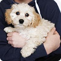 Adopt A Pet :: Otis - Sherman Oaks, CA