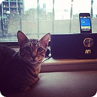 Adopt A Pet :: Vuma - New York, NY