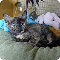 Adopt A Pet :: Sabrina - Lighthouse Point, FL