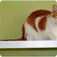 Adopt A Pet :: Biloxi - Marietta, GA