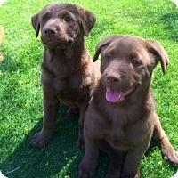Adopt A Pet :: Mojo - Scottsdale, AZ