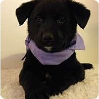 Adopt A Pet :: Jada - Rigaud, QC