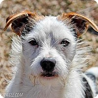 Adopt A Pet :: Rigby in Tulsa - Oklahoma City, OK