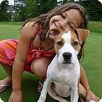 Adopt A Pet :: Margarita - Reisterstown, MD