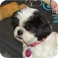 Adopt A Pet :: Rafie - Rigaud, QC
