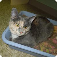 Adopt A Pet :: Smokes - Medina, OH