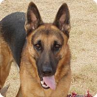 Adopt A Pet :: Tanner - Dripping Springs, TX