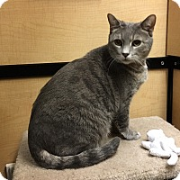 Adopt A Pet :: Smudge - Riverside, CA