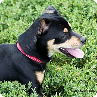 Adopt A Pet :: Meeko - Topeka, KS