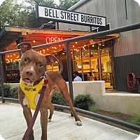 Adopt A Pet :: Huff (Courtesy Post) - Alpharetta, GA