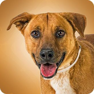 Retriever (Unknown Type)/Shepherd (Unknown Type) Mix Dog for adoption in Prescott, Arizona - Kenda