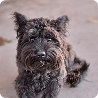 Adopt A Pet :: Darnell - Las Vegas, NV