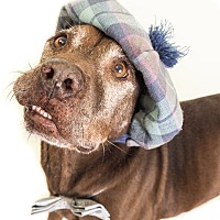 Adopt A Pet :: Darrell - Phoenix, AZ