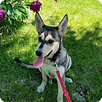 Adopt A Pet :: Akira - Lakeville, MN