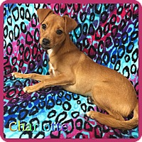 Adopt A Pet :: Charlotte - Hollywood, FL