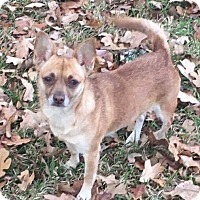 Adopt A Pet :: Mathilda - Natchitoches, LA