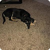 Adopt A Pet :: Molly - Oviedo, FL